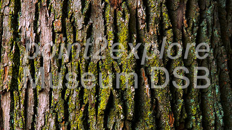 Digital Signage Tree Bark Background
